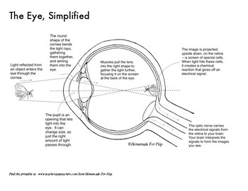 Anatomy of the Eye Diagrams for Coloring/Labeling, with Reference and Summary