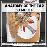 Ear Anatomy Model - 3D