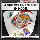 Eye Anatomy Model - 3D
