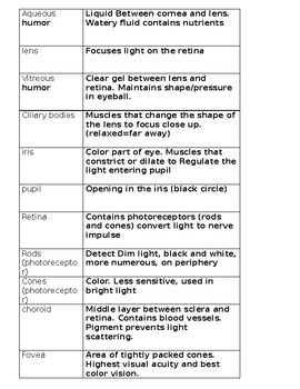 Eye Anatomy and Physiology