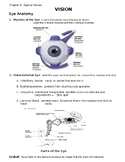 Eye Anatomy and Physiology