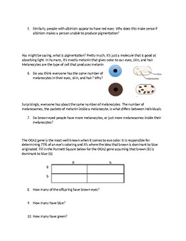 Eye Color Inheritance