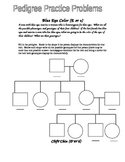 Eye Color Pedigree Worksheet