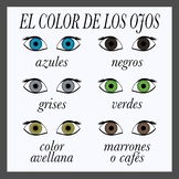 Eye Color in Spanish Printables (High Resolution)