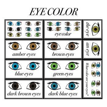 Eye Colors in English Printables (148 Hi-Res Images)