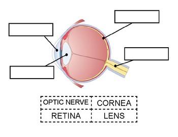 Eye Diagram Cut & Paste Worksheet
