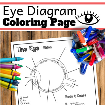 Eye Diagram.  Nervous System Coloring Pages.