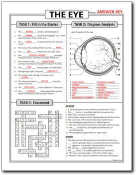 Eye Homework Review Worksheet / Test Prep {Editable}