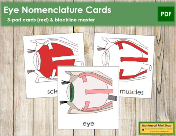 Eye Nomenclature (Simple) Cards (Red)