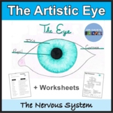 The Structure of the Eye: Nervous System