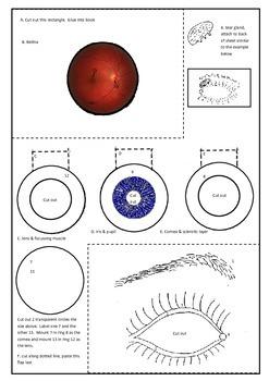 Eye anatomy - create a layered model