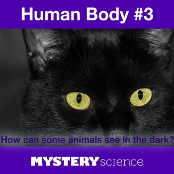 Human Body NGSS:Eyes and Light ❤ BUNDLE:Activity, Reading,