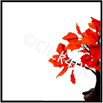 Styled Image ORANGE FALL TREE Commercial Use
