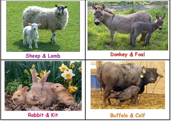 FARM ANIMALS - BABIES AND HOMES
