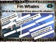 FIN WHALES: 10 facts. Fun, engaging PPT (w links & free graphic organizer)