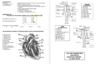 FINAL EXAM: Human Anatomy & Physiology (Spring-2nd-Semester)-Cumulative