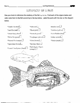 FISH DISSECTION ALTERNATIVE