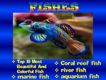 Fish - PowerPoint presentation - Coral reef - Marine and River fish