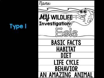FLIP BOOK Bundle : Eels - Sea Ocean Animals : Research, Report, Writing