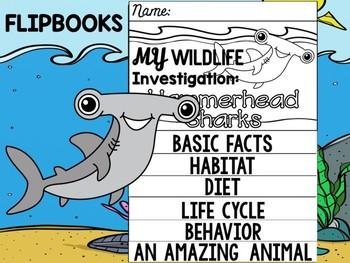 FLIP BOOK Bundle : Hammerhead Sharks - Sea Ocean Animals : Research, Report