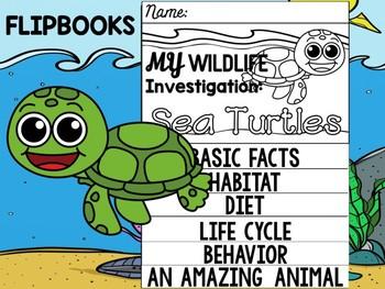 FLIP BOOK Bundle : Sea Turtles - Sea Ocean Animals : Research, Report, Turtle