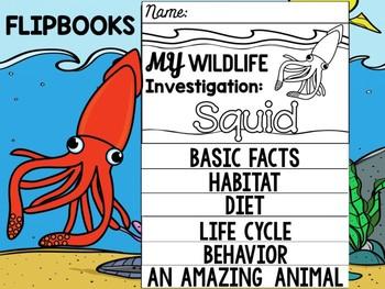 FLIP BOOK Bundle : Squid - Sea Ocean Animals : Research, Report, Mollusks