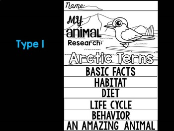 FLIP BOOK Set : Polar and Arctic Animal Research - Arctic Terns