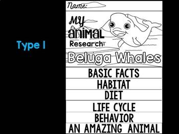 FLIP BOOK Set : Polar and Arctic Animal Research - Beluga Whales
