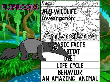 FLIPBOOK Bundle : Anteaters - Rainforest Animals : Research, Report, rain forest