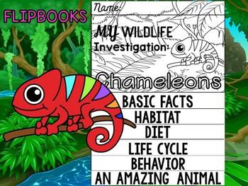 FLIPBOOK Bundle : Chameleons - Rainforest Animals: Research, Report, rain forest
