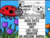 FLIP BOOK SET : Ladybugs - Insects : Research, Report, Bug