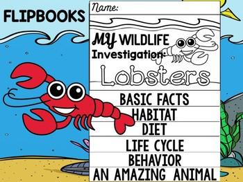 FLIP BOOK Bundle : Lobsters - Sea Ocean Animals : Research, Report, Writing