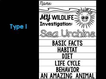 FLIP BOOK Bundle : Sea Urchins - Sea Ocean Animals : Research, Report, Animal