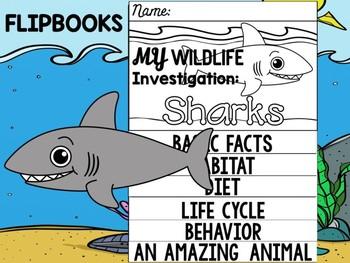 FLIP BOOK Bundle : Sharks - Sea Ocean Animals : Research, Report, Animal