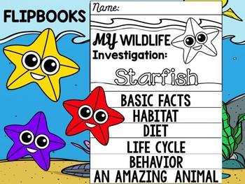 FLIPBOOK Bundle : Starfish - Sea Ocean Animals : Research, Report, Sea Stars