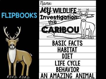 FLIP BOOK Bundle : Caribou -  Polar Animals : Research, Writing, Arctic