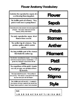 FLOWER ANATOMY VOCABULARY