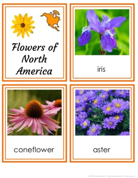 FLOWERS OF THE CONTINENTS 3-PART MONTESSORI INSPIRED PRINTABLE CARDS