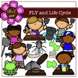 FLY and Life Cycle Digital Clipart (color and black&white)