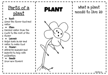 FOLDABLE all about Plants life cycle! CRAFTIVITY included!