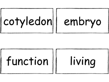 FOSS/AMSTI 3rd grade vocabulary word wall cards - Structures of Life