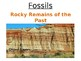 FOSSILS Rocky Remains of the Past