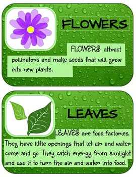 FOUR BASIC PARTS OF A PLANT