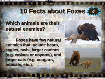 FOXES - visually engaging PPT w facts, video links, handouts & more