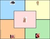FREE! 5 Senses Graphic Organizer for Primary