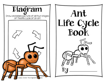 FREE Ant Life Cycle Research Book