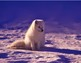 FREE - Arctic Animals, Polar Animals, Winter Animals  - 4 Clipart Posters (K-6)