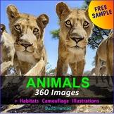 FREE - Arctic Animals, Polar Animals, Winter Animals  - 4 Clipart Posters (K-6)