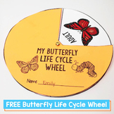 Butterfly Life Cycle Free