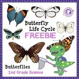 FREE Butterfly Life Cycle (egg, caterpillar, chrysalis, bu